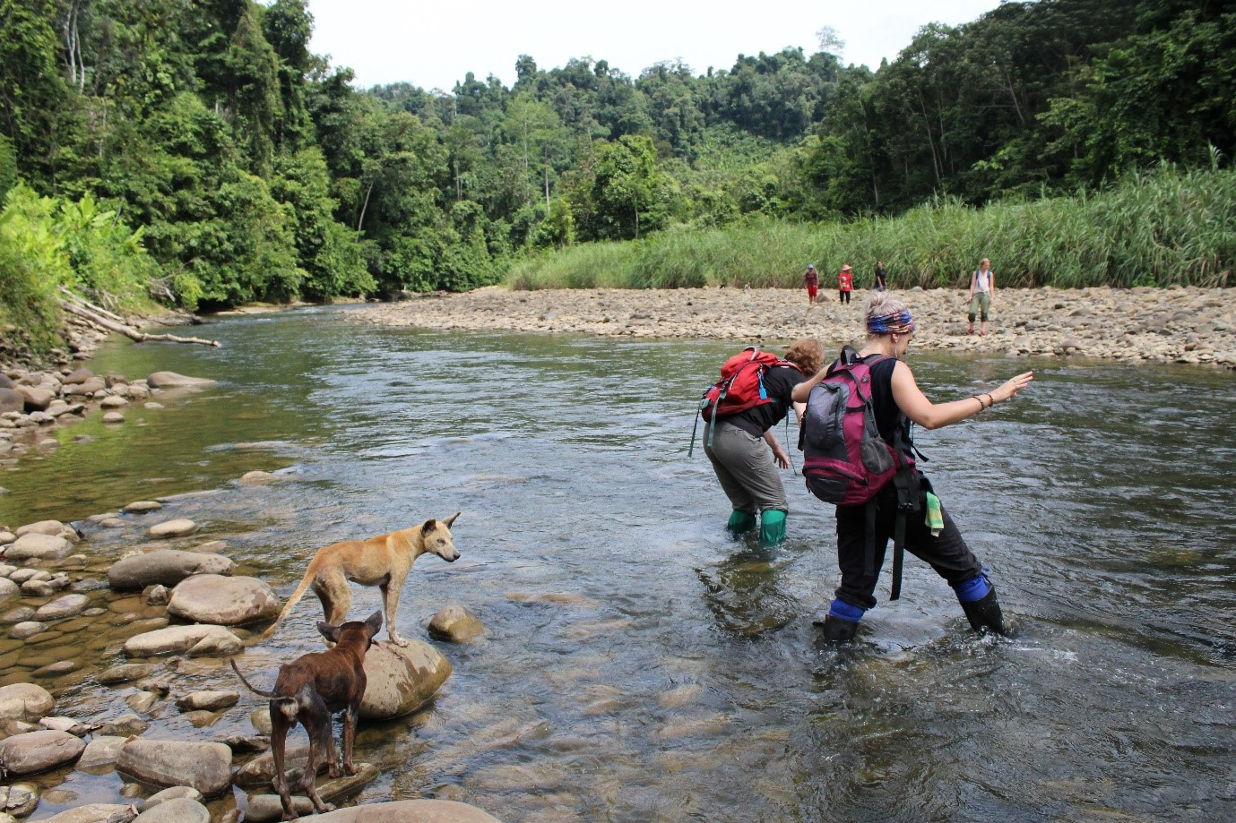 The first river crossing. We didn't realise there were about a dozen more to come. Each time it was so refreshing to wade through thigh-deep water; a welcome relief from the tropical humidity. Thankfully my camera avoided any refreshing dips though!