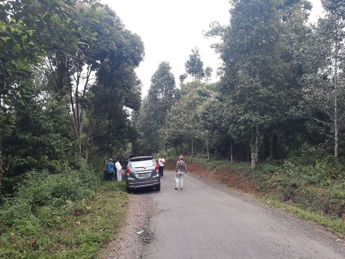 Our party stopped to view the wildlife corridor we are proposing to model using Condatis, between Mount Halimun and Mount Salak, within the National Park.